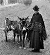 Woman with donkey and cart