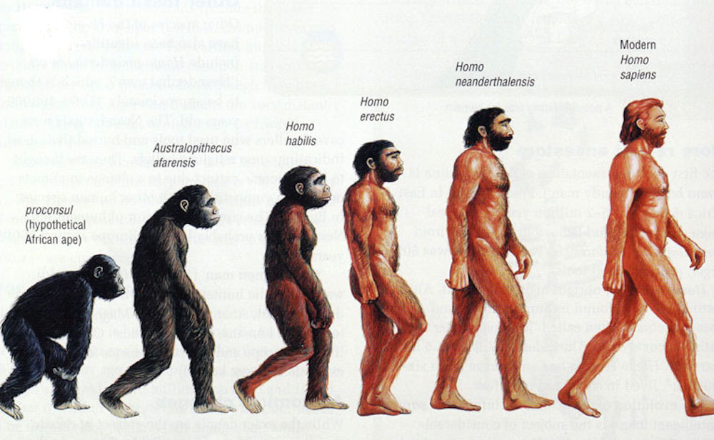 Supposed evolution of humans
